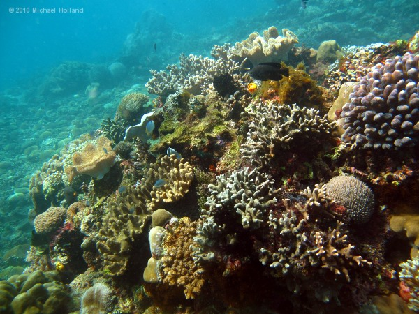Lembeh Reefs