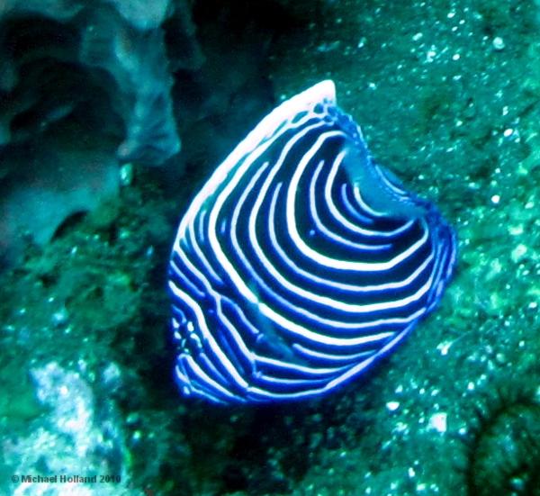 Southeast Asia Marine Life